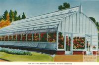Begonia Houses, Ballarat, 1958