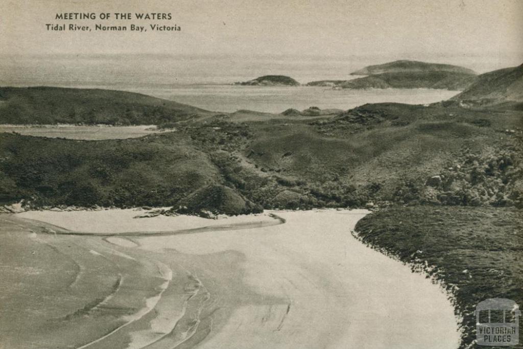 Tidal river, Norman Bay, 1954