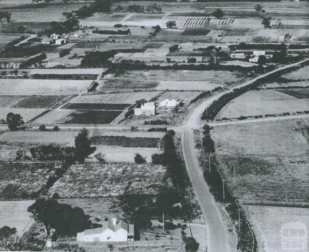 Market Gardens at Moorabbin, 1953
