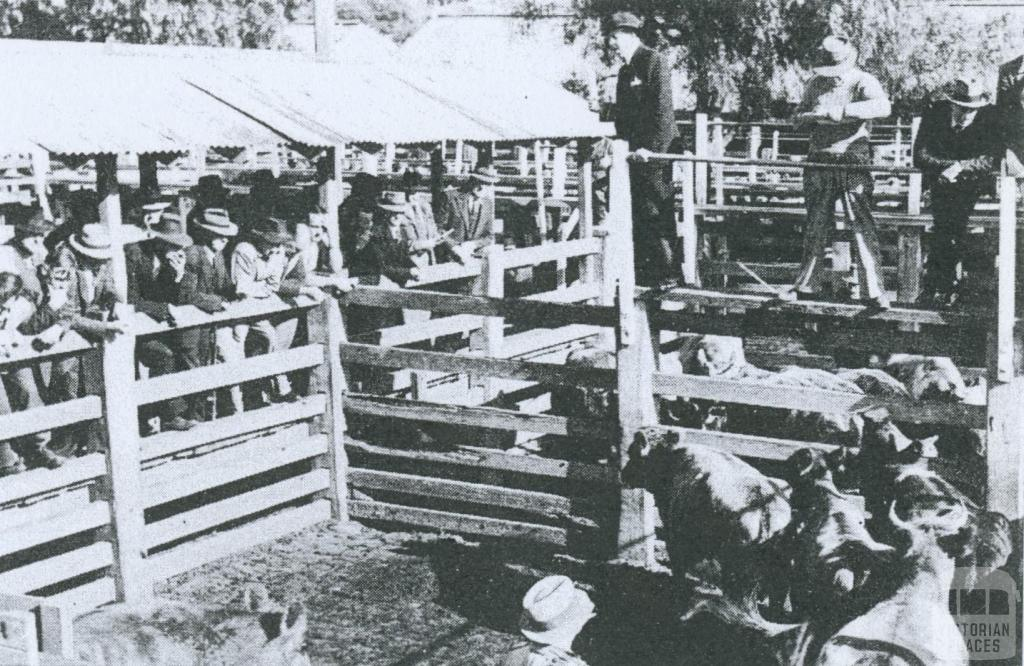 Cattle being sold at Newmarket Saleyards, 1953