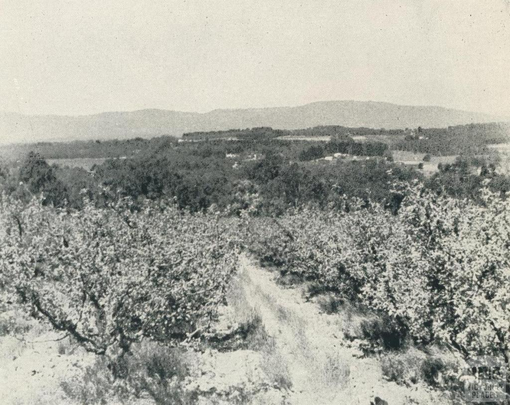 Apple Orchards, Vermont, 1956