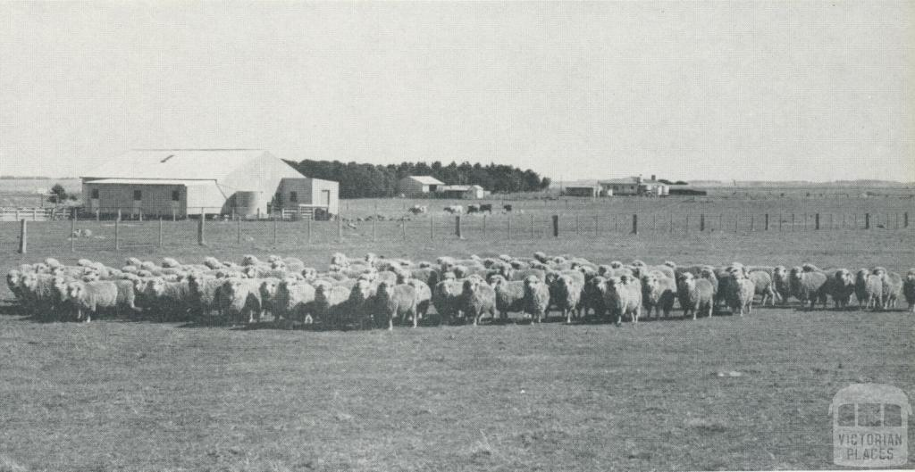 Sheep, woolshed and homestead, Woolsthorpe, 1958