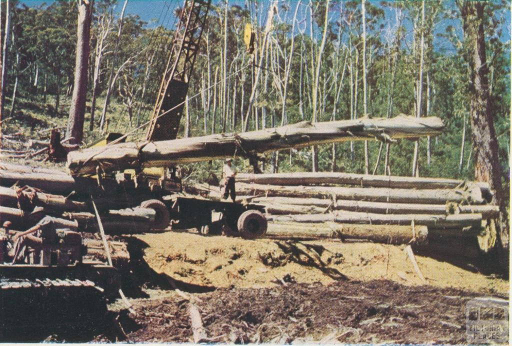 Loading logs in the forest, Licola, 1955