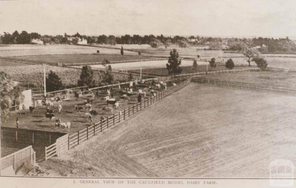 Caulfield model dairy farm, 1909