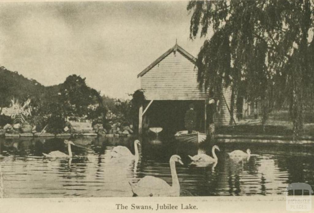 The swans, Jubilee Lake, Daylesford