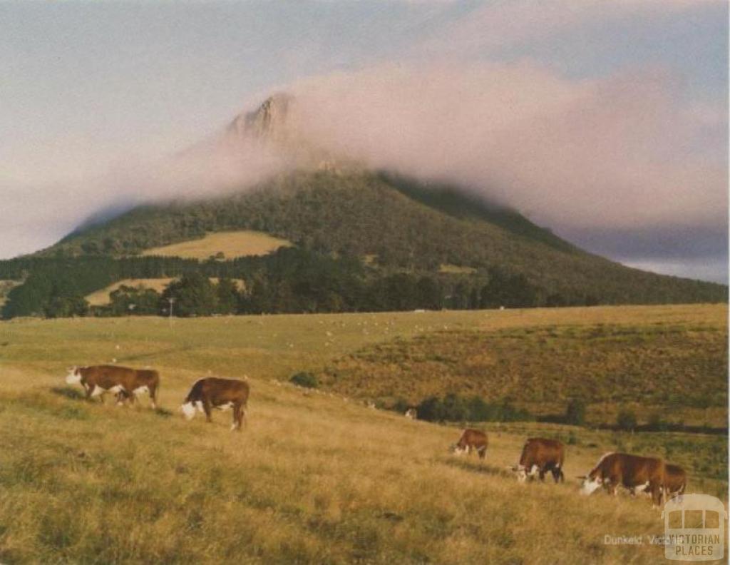 Cattle grazing in front of Mt Sturgeon, Dunkeld